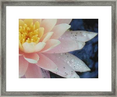 Lonely Lilly Framed Print by Lori Thompson
