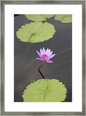 Lonely Lily Framed Print by Vadim Levin