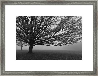 Framed Print featuring the photograph Lonely Low Tree by Maj Seda