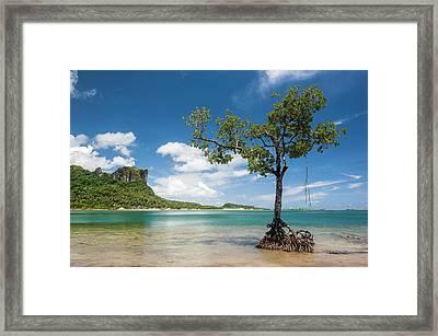 Lonely Mangrove Tree Standing Framed Print by Michael Runkel