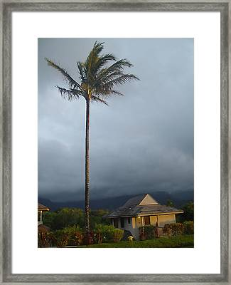 Lonely Palm Framed Print