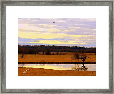 Lonely Pond Framed Print