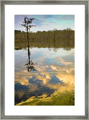 Lonely Reflection Framed Print