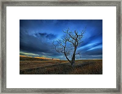 Lonely Sentinel Framed Print by Thomas Zimmerman