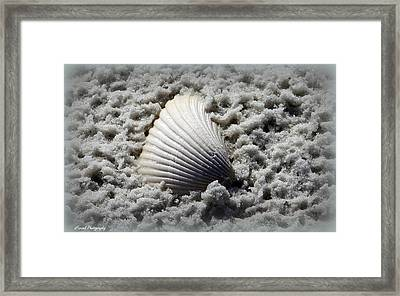 Lonely Shell Framed Print by Debra Forand