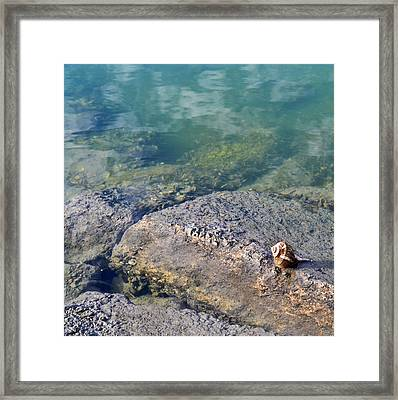 Lonely Shell Framed Print by Patricia Greer