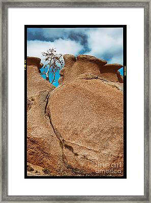 Lonely Tree And Pink Granite Rock - Enchanted Rock State Natural Area - Texas Hill Country Framed Print by Silvio Ligutti