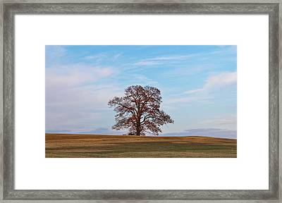 Lonely Tree Framed Print by Cynthia Guinn