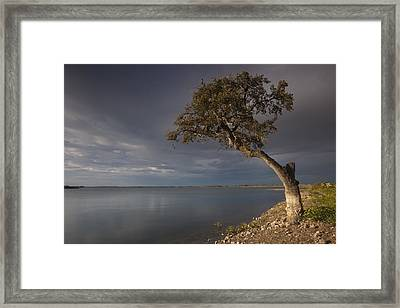 Lonely Tree In Alqueva Framed Print by Ruben Vicente