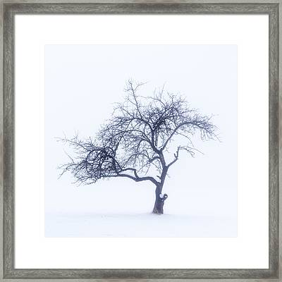 Lonely Tree In The Fog Framed Print by Aldona Pivoriene
