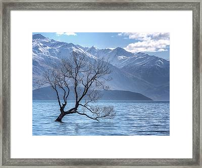 Lonely Tree Framed Print by Kim Andelkovic