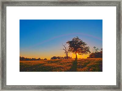 Framed Print featuring the photograph Lonely Tree On Farmland At Sunset by Alex Grichenko
