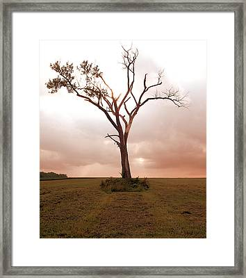 Framed Print featuring the photograph Lonely Tree by Ricky L Jones