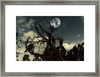 Lonely Tree Roots Reaching For A Full Moon Framed Print
