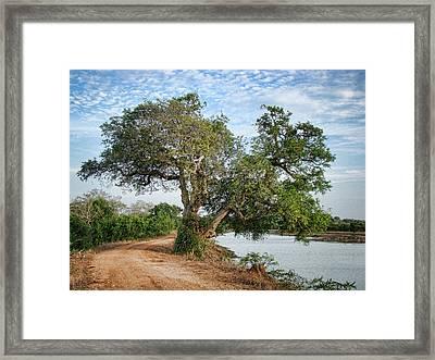 Lonely Tree Framed Print by Sanjeewa Marasinghe