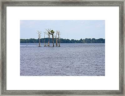 Lonely Trees Framed Print by Carolyn Ricks