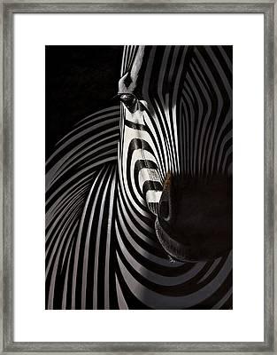 Lonely   Zebra Framed Print by Raphael  Sanzio