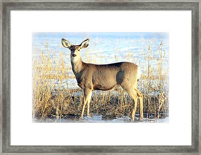 Framed Print featuring the photograph Lonesome Doe Sunset by Barbara Chichester