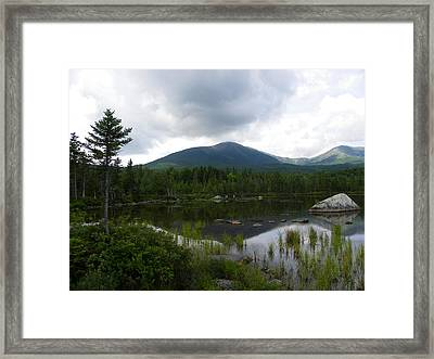 Lonesome Pine At Sandy Stream Pond Framed Print