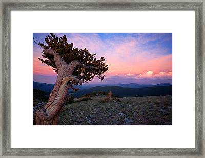 Lonesome Pine Framed Print by Jim Garrison