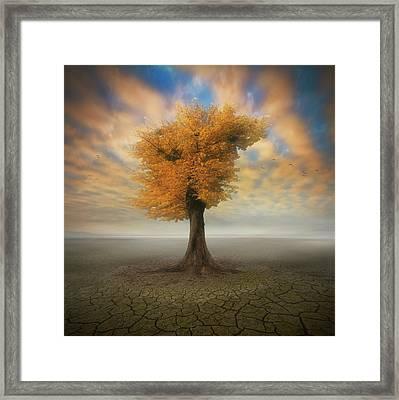 Lonesome Framed Print by Piotr Krol (bax)