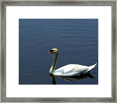 Lonesome Swan Framed Print
