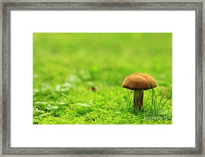 Lonesome Wild Mushroom On A Lush Green Meadow Framed Print