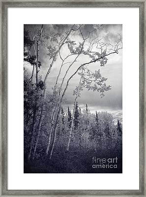 Lonesome Woods Framed Print