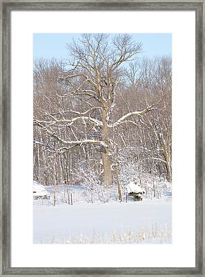 Framed Print featuring the photograph Loney Ash by Dacia Doroff
