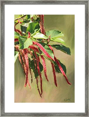 Long And Thin Framed Print by Rosalie Scanlon