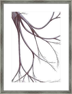 Framed Print featuring the drawing Long Branches by Giuseppe Epifani