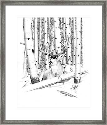 Long Buck Framed Print