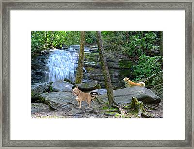 Long Creek Falls Framed Print by Bob Jackson