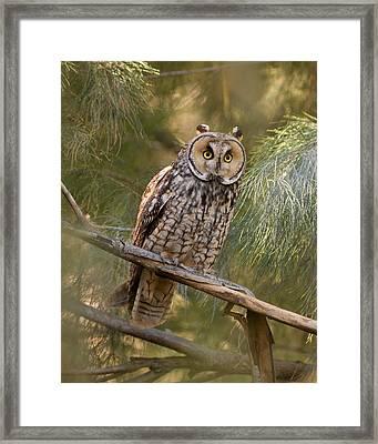 Long-eared Owl Framed Print by Doug Herr