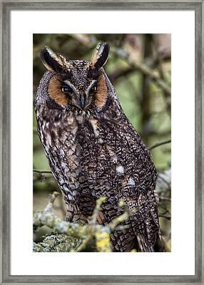 Long Eared Owl In The Open Framed Print