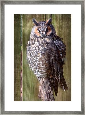 Framed Print featuring the photograph Long Eared Owl by Joseph Skompski