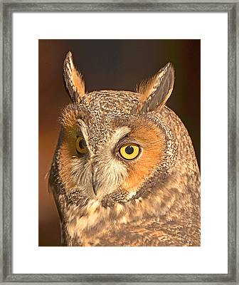 Long-eared Owl Framed Print by Nancy Landry