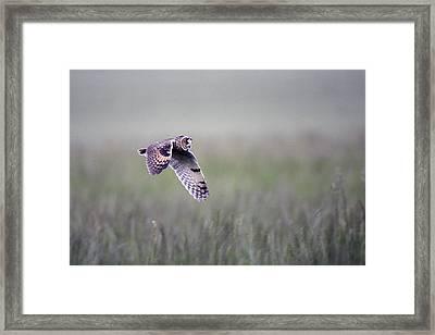 Long-eared Owl Framed Print
