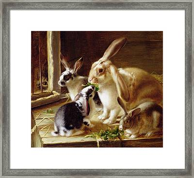 Long-eared Rabbits In A Cage Watched By A Cat Framed Print