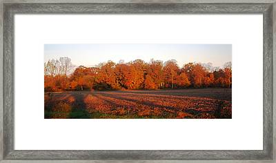 Long Fall Shadows Framed Print