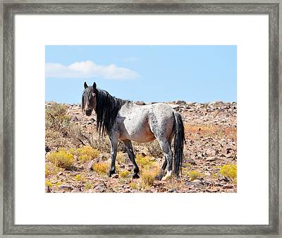 Long Gray Hair Framed Print by Lula Adams