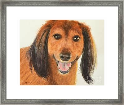 Long Haired Dachshund Framed Print by Kate Sumners