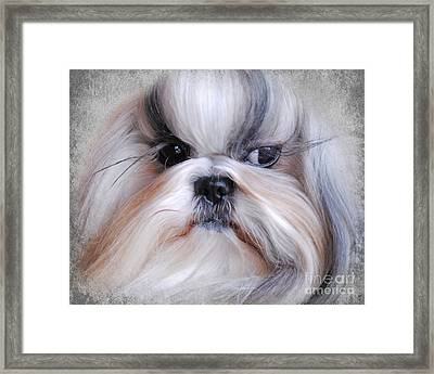 Long Haired Shih Tzu Framed Print