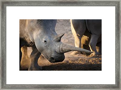 Long Horn Framed Print by Andy-Kim Moeller