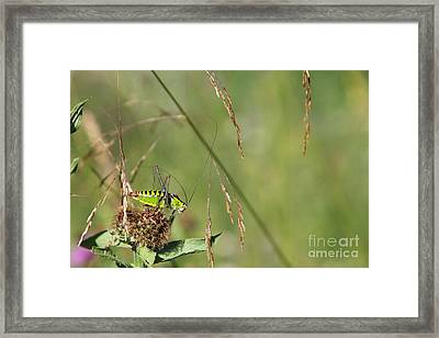 Framed Print featuring the photograph Long-horned Katydid by Jivko Nakev