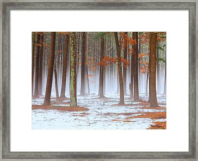 Long Island Pine-oak Forest Framed Print by June Jacobsen