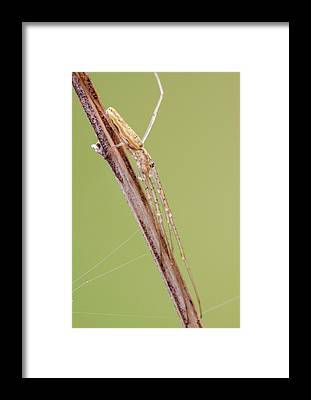 Arachnida Framed Prints