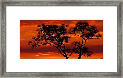 Long Leaf Pine Framed Print
