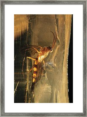 Long-legged Fly In Amber Framed Print