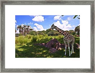 Long Neck Framed Print by Ryan Crane
